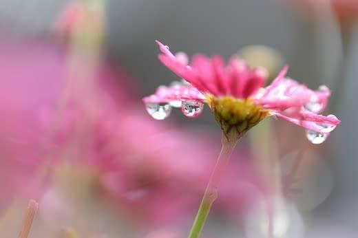 保湿化粧水おすすめ人気ランキングセラミド